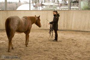 Pferd rufen