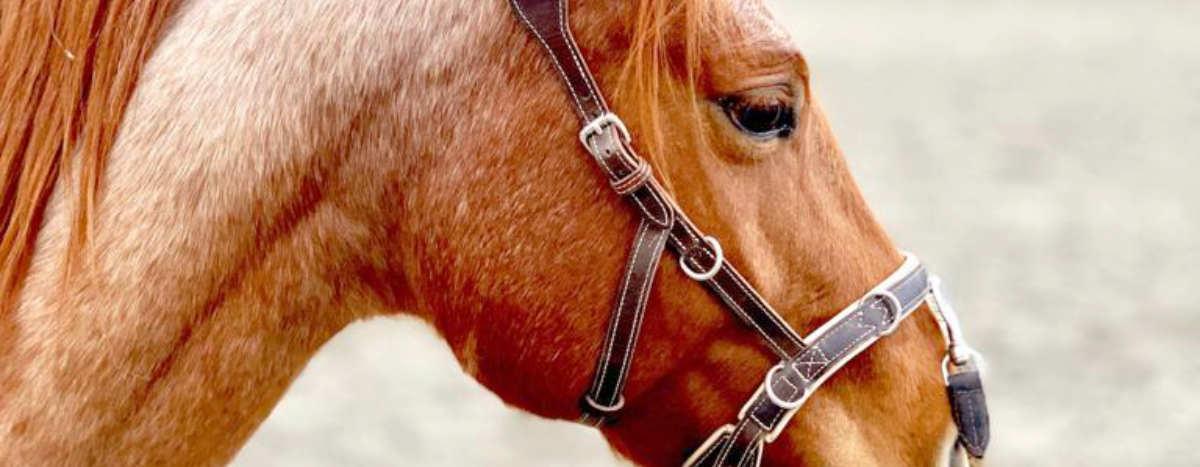 kappzaum-pferd-slider