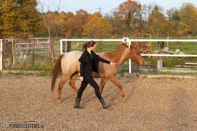 Pferde verstehen lernen