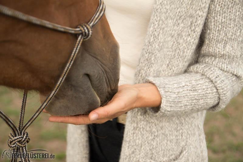 Futterlob bei Pferden - Leckerli richtig geben