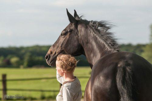 Pferd Führung (Copyright: Susanne Hauk)