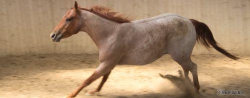 Pferd widersetzt sich