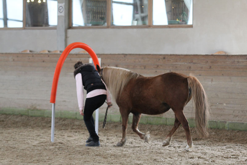 horse agility das perfekte pferdetraining mit spa faktor. Black Bedroom Furniture Sets. Home Design Ideas