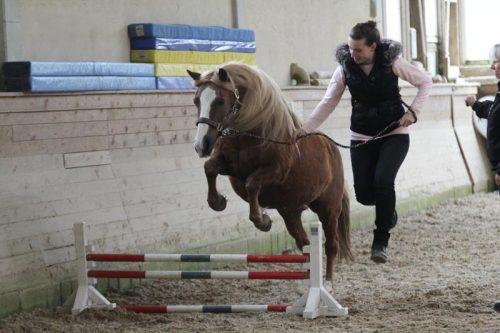 Horse Agility (Foto: Reiner Kolsen)