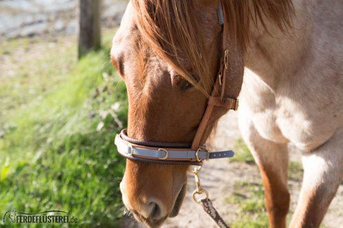 Veganes Pferdezubehör! Tiergerecht und pferdegerecht 4