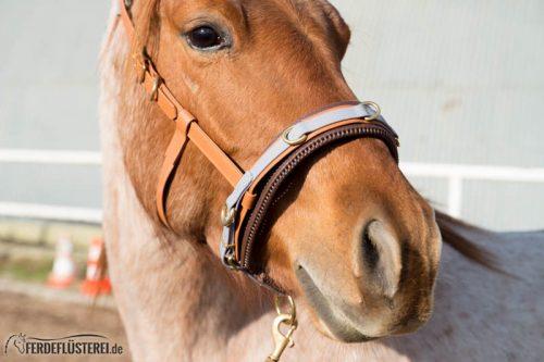 Veganes Pferdezubehör! Tiergerecht und pferdegerecht 6