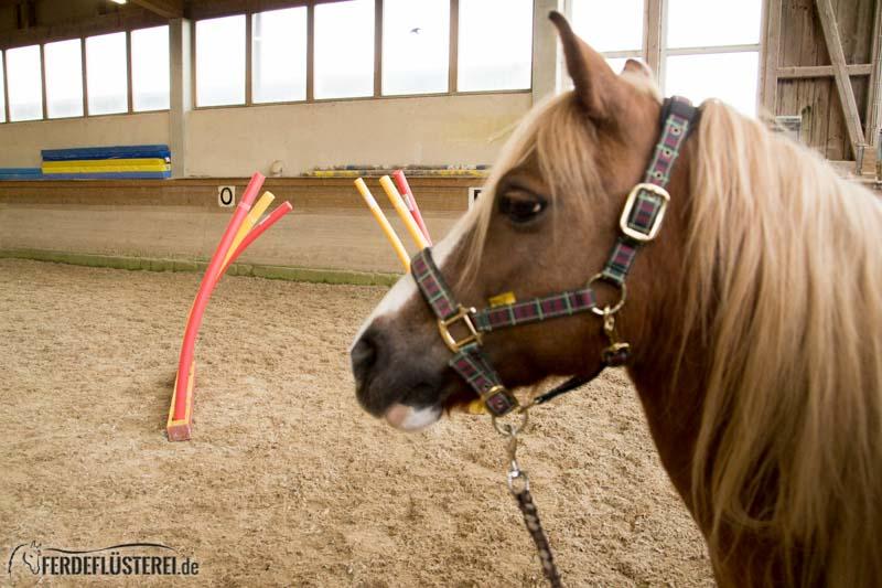 Horse Agility Pferdetraining
