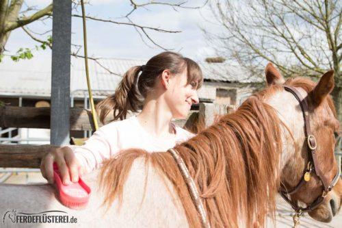 Pferd richtig putzen: Pferde Putzgesicht