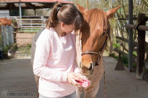 Fellwechsel Pferd putzen