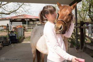 Pferd kuscheln