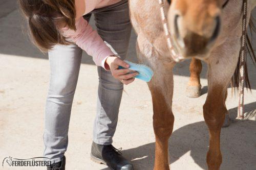 Pferd richtig putzen: Massagebürste Pferd