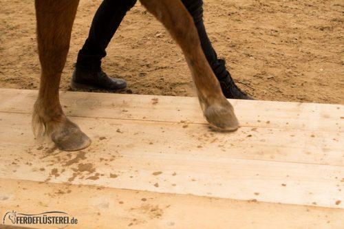 Horse Agility Corinna Ertl
