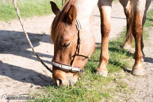 Veganes Pferdezubehör! Tiergerecht und pferdegerecht 5