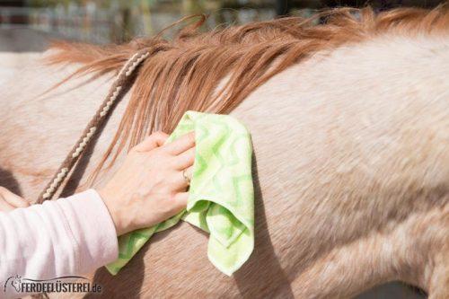 Pferd richtig Putzen: natürliche Fellpflege