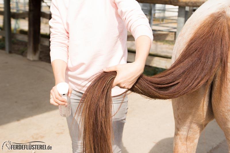 Pferd richtig Putzen: Schweif Pferd pflegen