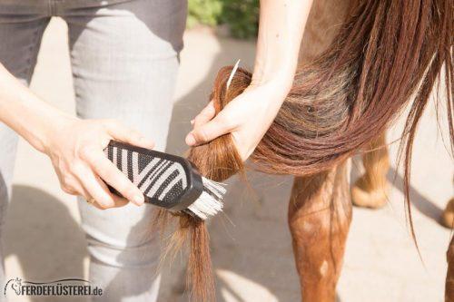 Pferd richtig Putzen: Schweif Pferd pflegen verlesen