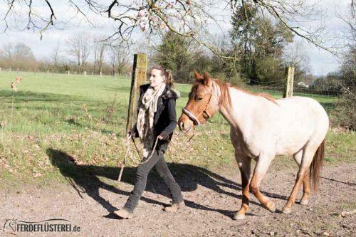Veganes Pferdezubehör! Tiergerecht und pferdegerecht 15