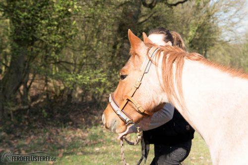 Veganes Pferdezubehör! Tiergerecht und pferdegerecht 12