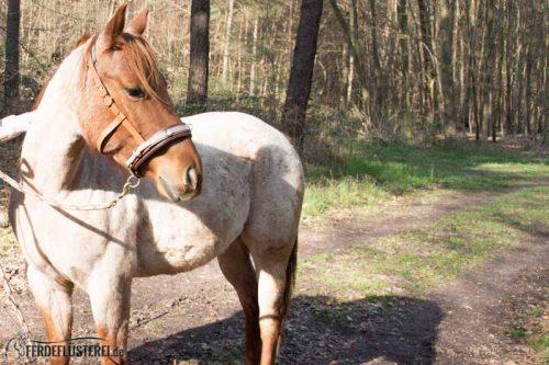 Veganes Pferdezubehör! Tiergerecht und pferdegerecht 14