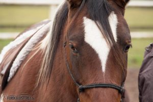 Pferde als Therapeuten