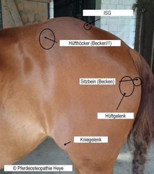 Faszien Pferd (Wiebke Heye)
