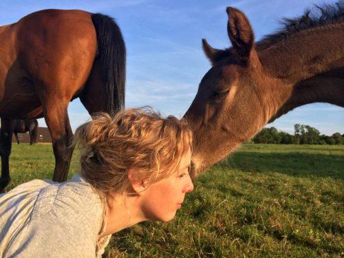 Herdis Hiller Pferde verstehen