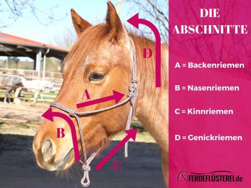 Knotenhalfter richtig ausmessen - Überblick Pferdekopf