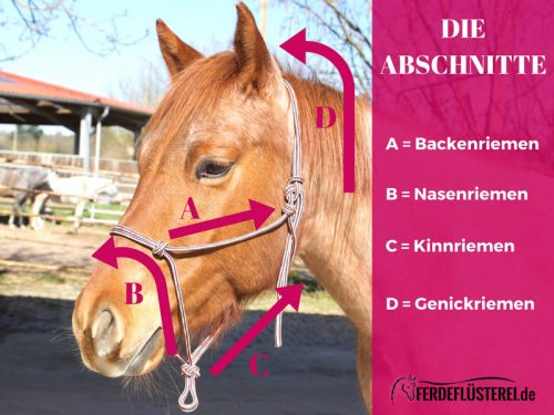 Knotenhalfter knoten - Überblick Pferdekopf