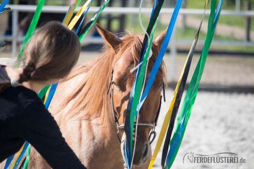 Pferd vor Flatterband