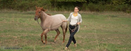 Fokus Pferdetraining