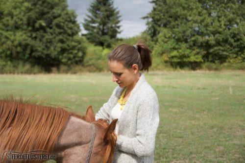 Kuscheln Pferd