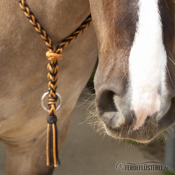 Halsring Amber an Pferd - BF-HRAM-BSXX/28