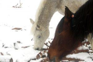 Äste im Schnee