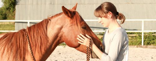 Vertrauen Pferd