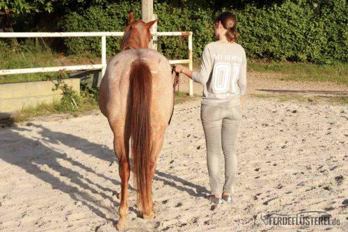 Du willst ein feines Pferd? Von der Kraft der leisen Töne 1