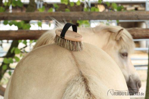 Isländer Pony mit Bürste