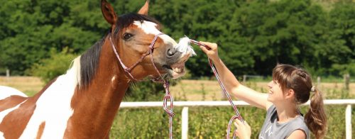 Pferdchen hat Spaß