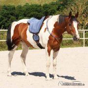 Reitring Brockamp – Pferd ganz leicht – BA-RREF-BSXX