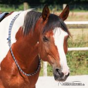 Reitring Brockamp - Pferd ganz leicht - BA-RREF-BSXX