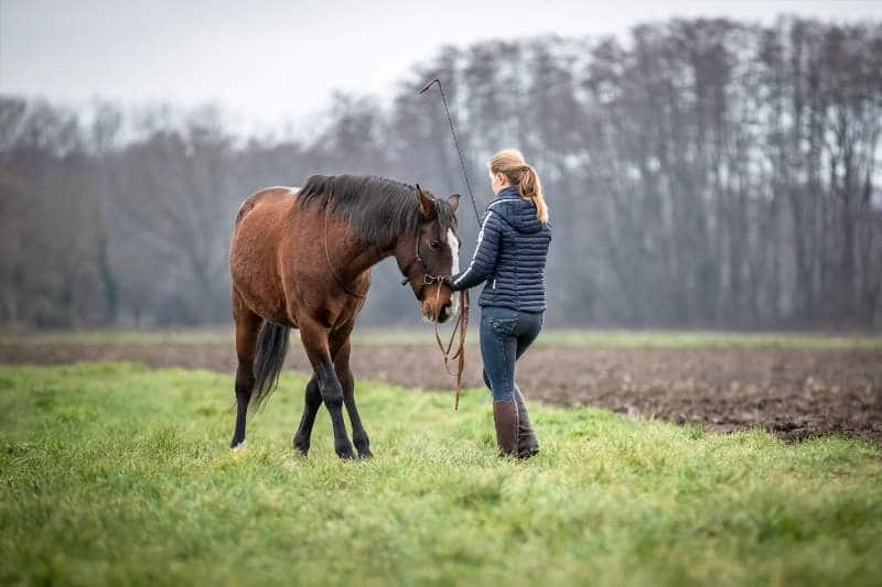 Hero Merkel mit Pferd (Bild: Caroline Burgert Photografie) Seitengang