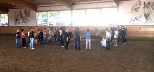 Spirit Horse Festival
