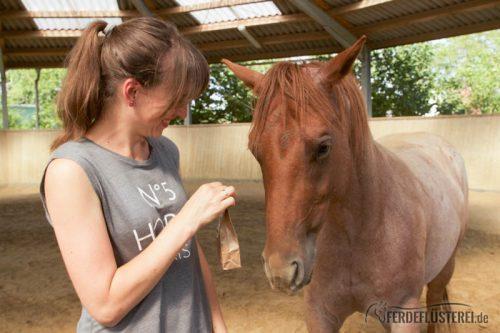 Leckerli Training mit Pferd - Biostickies Leckerlis mit Kräutern