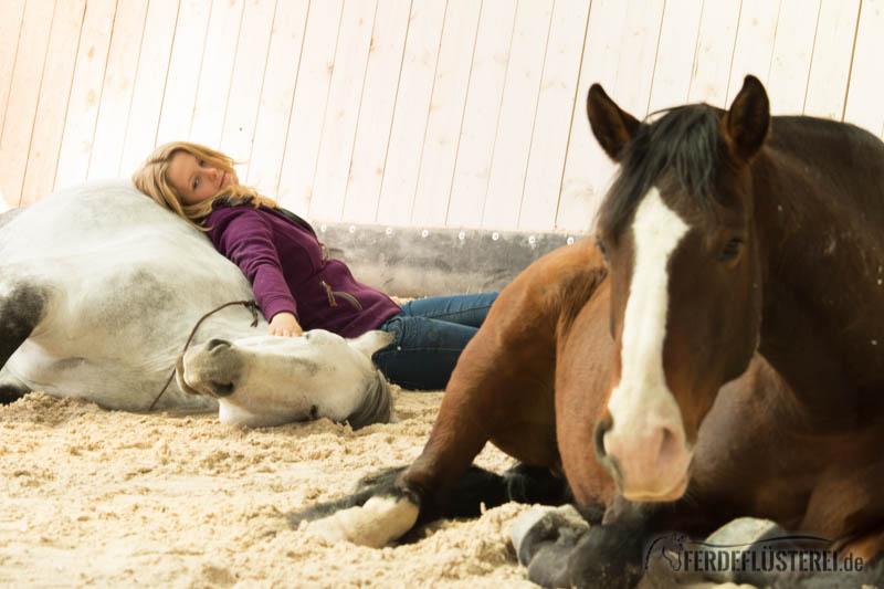 Hero Merkel - Pferdetrainerin Freiarbeit