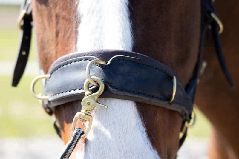 Seitengänge Pferd! Von K wie Kruppeherein bis T wie Traversale 1