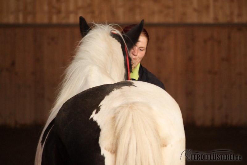 zirkuslektionen pferd was sie alles f r eure pferde tun k nnen. Black Bedroom Furniture Sets. Home Design Ideas