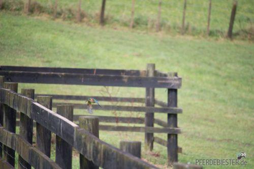 Milben und das Pferd - Herbst