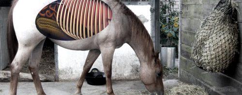 Verdauung Pferd