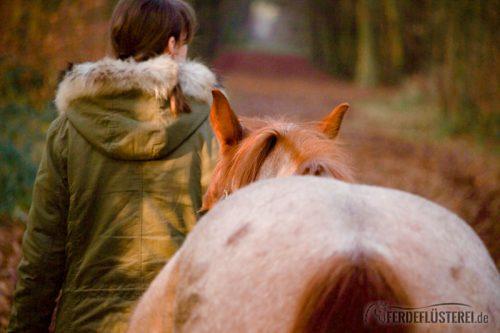 Pferdeanatomie erklärt – Was die Pferde uns mit ihren Ohren alles sagen 3