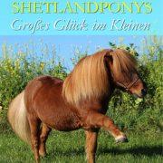 Shetlandponys - Grosses Glück im Kleinen PV-BUSP/2 - vorne
