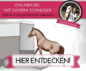 banner_video-sandra_rechteck